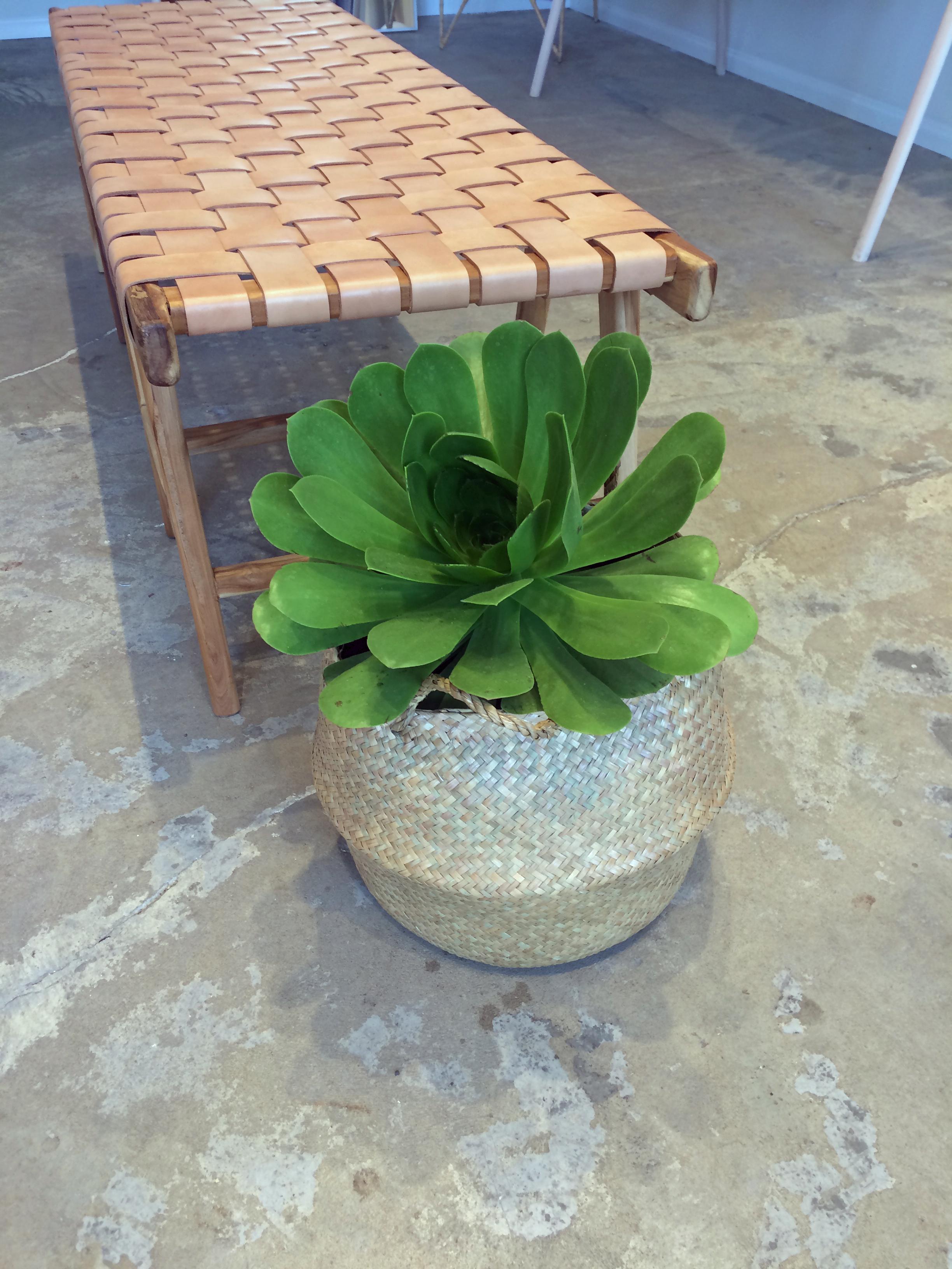 succulent on concrete floor
